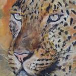 leopard_2013_huile_30x40